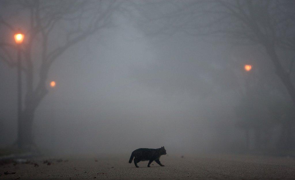Густой туман фото